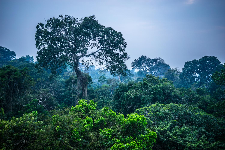 Amazon Rainforest Sunrise Peru National Geographic Picture
