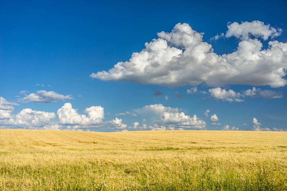 Idaho Sod Farms Enroute To Yellow Stone National Park
